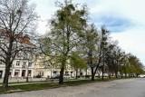 Ministerstwo Kultury uchyliło zakaz wycinki drzew na Podwalu Staromiejskim w Gdańsku. Ma tam powstać parking podziemny [zdjęcia]