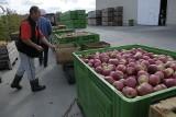 Sady pełne owoców, a portfele puste. Rolnicy protestowali w Warszawie