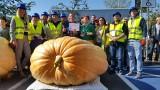 To największa dynia w Polsce! W Krapkowicach padł rekord