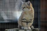 Koty, antylopy i inne gatunki. Zobacz mniej i bardziej znane zwierzęta z Gdańskiego Ogrodu Zoologicznego [ZDJĘCIA]