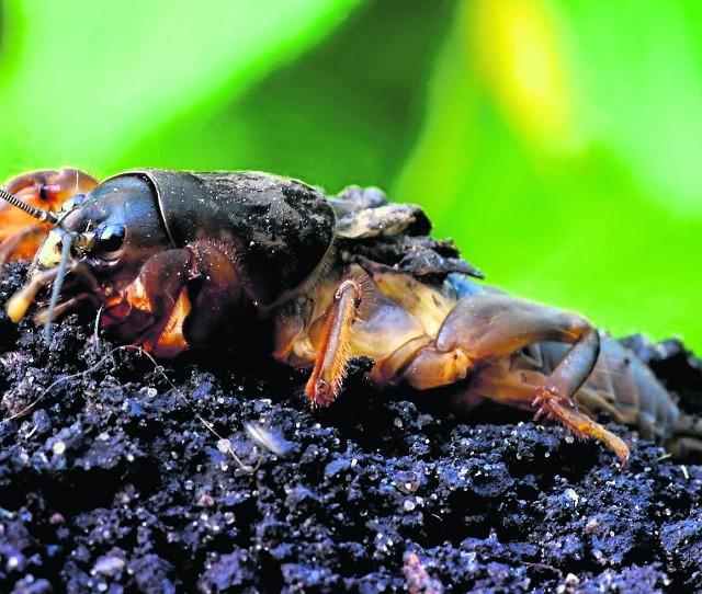 Na turkucia podjadka nie ma w 100 proc. skutecznego sposobu