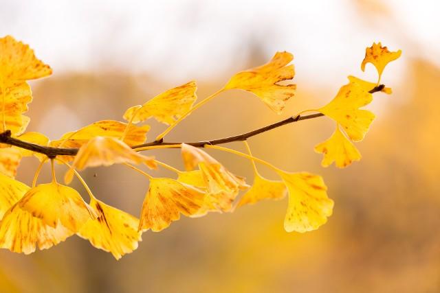 Czeka nas bardzo wyjątkowa jesień - pogoda w październiku ma być lepsza niż we wrześniu