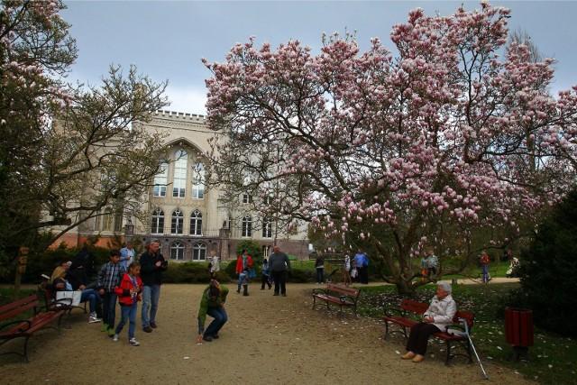 Przepiękna pogoda to idealna okazja na spacer pośród kwiatów. Teraz kwitną azalie i różaneczniki, co robi ogromne wrażenie wśród zwiedzających, porównywalne z przepięknymi magnoliami.