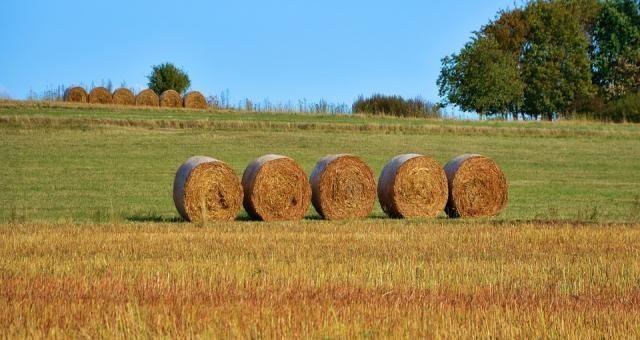 Dzierżawa ziemi nie dobije dochodu rolnika