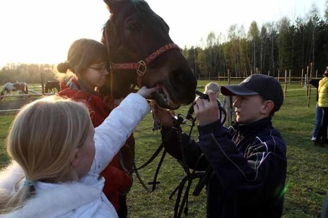 Dzieci chętnie przychodzą na zajęcia w stadninie w Grabówce. – Nawet jeśli dziecko jest nieśmiałe na co dzień, tutaj może odnaleźć swoją odwagę – podkreśla Paweł Kalinowski, właściciel klubu jeździeckiego.