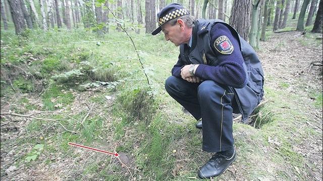 Z ziemi wystaje tylko część pocisku (zaznaczona strzałką). Koło tego miejsca można jeszcze znaleźć fragmenty innych niewybuchów. Na zdjęciu strażnik miejski Marian Wojtczak.