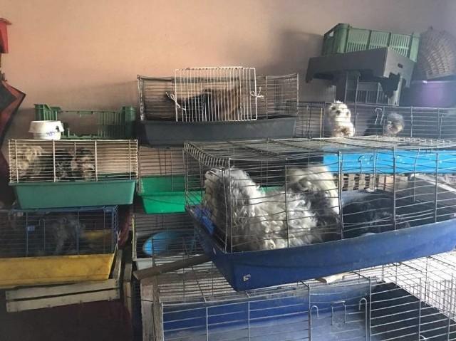 Psy żyły w króliczych klatkach i... w odchodach