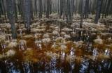 Przepiękny i osobliwy Rezerwat Zabłocie. To tylko 20 km od Rzeszowa. Zobaczcie zdjęcia