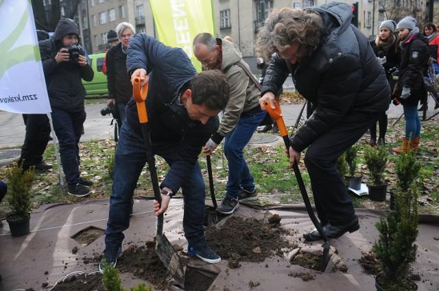 Sadzenie krzewów na Alejach Trzech Wieszczów w Krakowie.