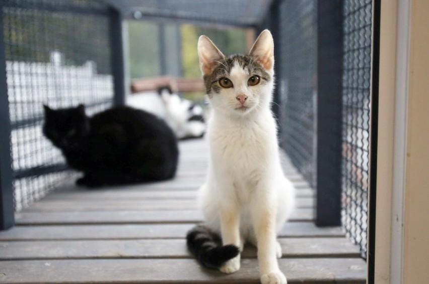 Zobacz zdjęcia kotów do adopcji. To Martin