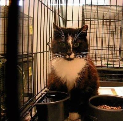 """W warszawskiej """"""""Koterii"""", lecznicy dla kotów wolno żyjących, zwierzaki są sterylizowane i leczone Fot. archiwum """"Koterii"""""""
