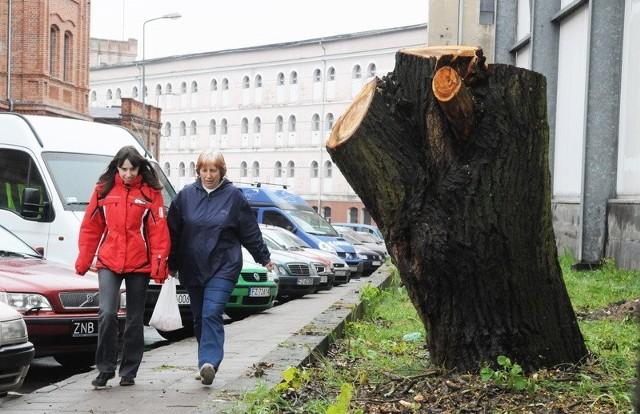 Ścięte drzewa wskazują miejsce, gdzie będzie wjazd do Biedronki. Niektórym mieszkańcom nie podoba się pomysł lokalizacji dyskontu przy Fabrycznej. Pani Iwona i jej córka Małgorzata jednak nie są przeciwniczkami inwestycji.