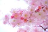 Dzień Matki w 2021 roku. Piękne, życzenia na dzień matki! Kiedy będzie Dzień Matki? ZOBACZ 11.05.2021