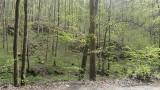 Nadleśnictwo Krzeszowice odwołało zakaz wstępu do lasu. Domagali się tego mieszkańcy