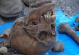 Koczała. Przy budowie Orlika znaleziono ludzkie szczątki