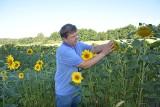 Andrzej Kurtys w Budyniu uprawia także słoneczniki. Z wizytą w gospodarstwie w powiecie świeckim [zdjęcia]