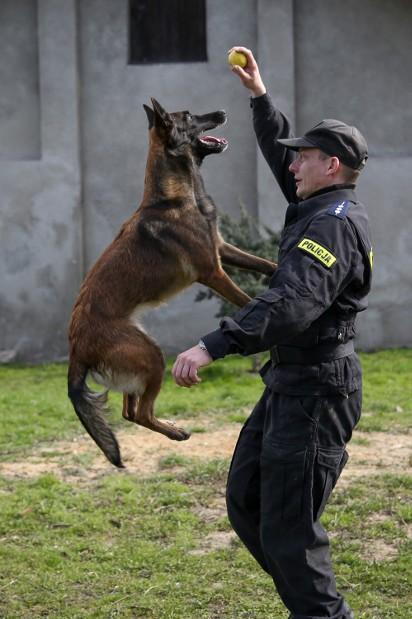 Nowość Małopolska. Psy policyjne i ich opiekunowie [ZDJĘCIA] | Gazeta EU45