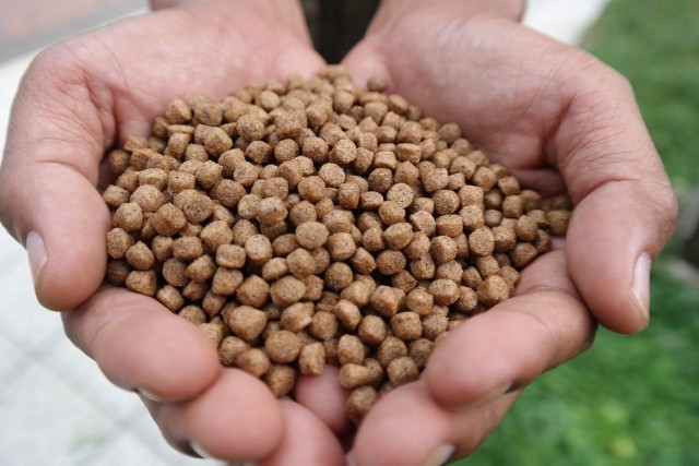 Począwszy od 1 lipca 2021 r., możliwe jest ubieganie się o większe niż dotychczas wsparcie na zakup i montaż kotła na pellet o podwyższonym standardzie.