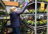 Szykujemy ogród na wiosnę. Gdzie kupić kwiaty? Polecają się ogrodnictwa. Czynne są też ogrody w Leroy Merlin, OBI czy Castoramie