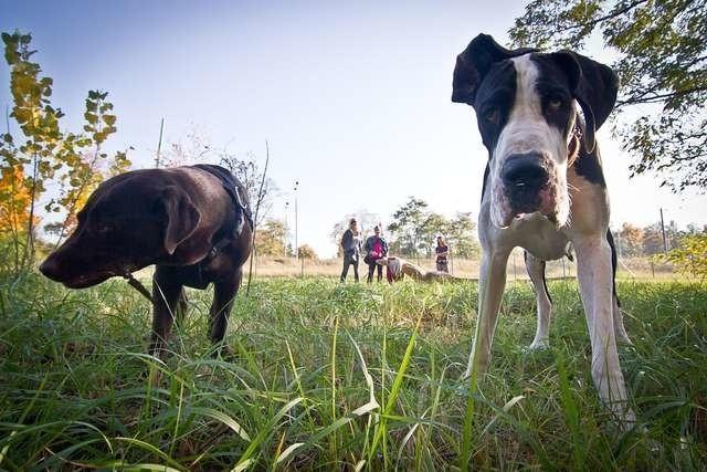 Wybieg dla psówWybieg dla psów w Myślęcinku