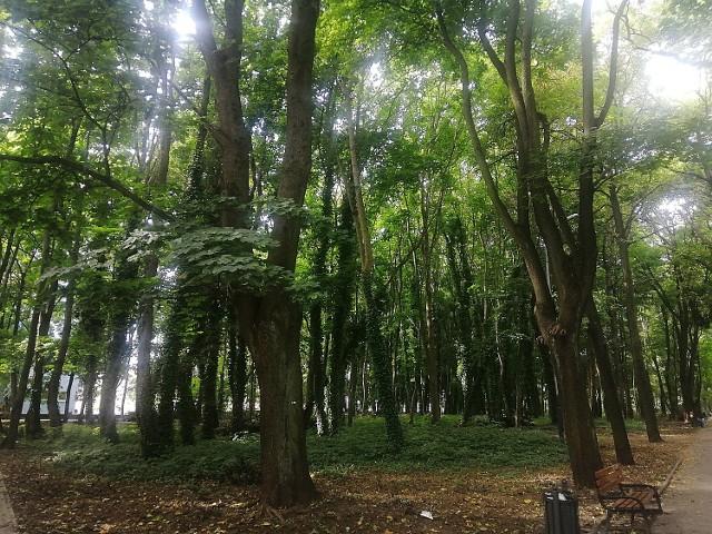 Bluszcz pospolity pokrywa alejki, oplata konary, pnie drzew tworząc nieprzepuszczające światło sklepienie. Dopełnieniem mrocznego i tajemniczego klimatu jest historia tego łódzkiego zieleńca. Jeszcze w latach 80-tych mieścił się tutaj cmentarz ewangelicko-augsburski, a dziś fragmenty nagrobków widoczne są przy bramie głównej.POZNAJECIE TO MIEJSCE?