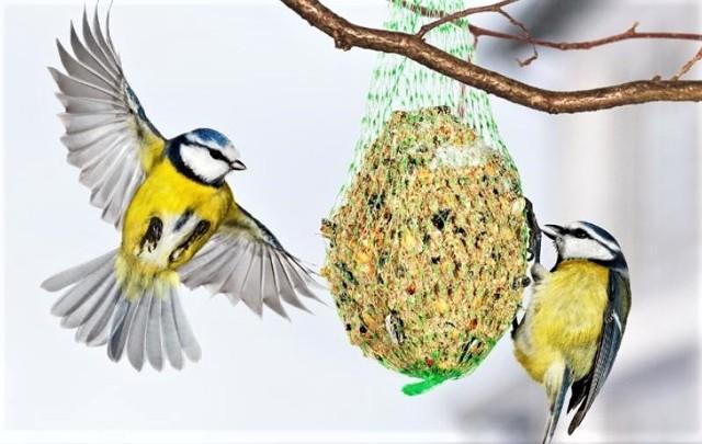 Zima ptaki należy dokarmiać. Jak to robić, grudziądzkie rodziny przekonają się już w sobotę, 20 stycznia, w parku miejskim