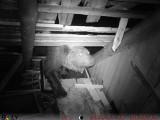 Tatry. Zobacz zniszczenia, jakie wyrządził niedźwiedź szukający miodu