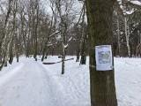 Kontrowersje wokół miejscowego planu zagospodarowania dla nadmorskiej części Brzeźna. W czwartek głosowanie na sesji Rady Miasta Gdańska