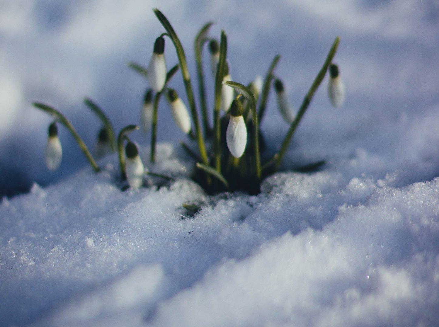 Pierwszy Dzień Wiosny 20 Czy 21 Marca Kiedy Wypada