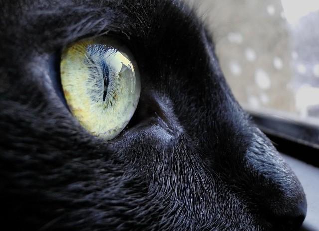 Kot. Zdjęcie archiwalne.