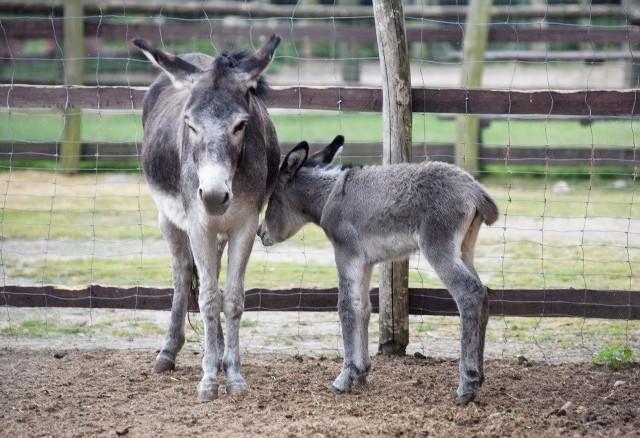 Mini Zoo w Mostkach ma nowych mieszkańców!