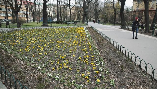 Planty to symbol i wizytówka Krakowa już od blisko 200 lat. Powinny pozostać bez zmian, czy rozwijać się w jakimś kierunku?