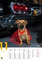 Komu w drogę, temu pies. Niezwykły kalendarz z fotografiami psów