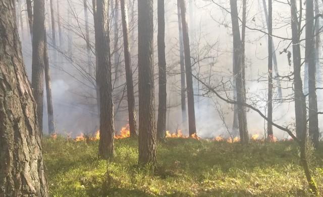 To był już drugi pożar w ciągu doby w tym samym leśnictwie.