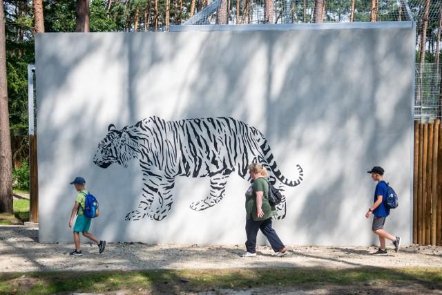 """W Poznaniu każdy, kto postanowi wybrać się do Nowego Zoo, będzie mógł zobaczyć nową tygrysiarnię, która znajduję się tuż obok starej, zamieszkałej przez Tungusa. To właśnie w nowej przestrzeni zamieszkują dwa """"nieumarłe"""" tygrysy, uratowane z białoruskiej granicy, czyli Gogh i Kan. Prezentujemy zdjęcia zarówno nowej, jak i starej tygrysiarni.Zobacz zdjęcia poznańskich tygrysów --->"""