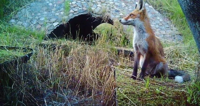 Lisy, łosie, wilki, sarny i inne zwierzęta każdego dnia...