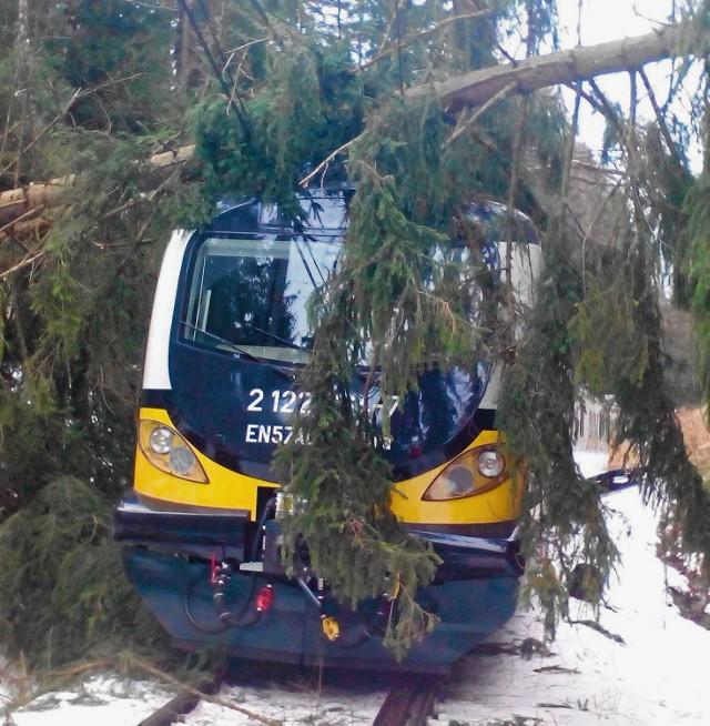 Drzewo spadło na tory i poważnie uszkodziło pociąg Kolei Dolnośląskich. Straty oszacowano na ok. 400 tys. złotych