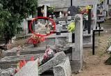 Pies zamieszkał na cmentarzu w Bydgoszczy. Pozbawiony pana, ale nie pozbawiony uczuć