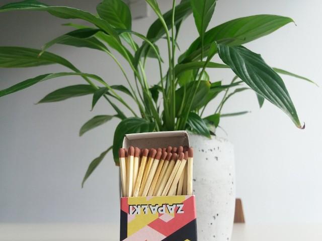 Ostatnio popularyzowana jest metoda wzbogacania roślin w siarkę za pomocą zapałek wkładanych do ziemi. Ale to ryzykowny pomysł.