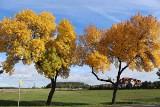 Jesień w Krośnie Odrzańskim w obiektywie Klaudii i Julii, mieszkanek Krosna Odrzańskiego i Połupina. Zobaczcie te pełne kolorów zdjęcia!