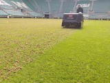 Murawa na Stadionie Wrocław posłuży ponad dwa razy dłużej niż powinna. To kilkaset tysięcy złotych oszczędności