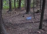 Dominikowice. Czyja to sprawka? Grzybiarzy, turystów, czy złośliwych leśnych skrzatów? Zaśmiecony las, który odpycha zamiast zapraszać