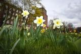 Za trzy dni 16 stopni we Wrocławiu. Czy wiosna zostanie z nami już na dobre?