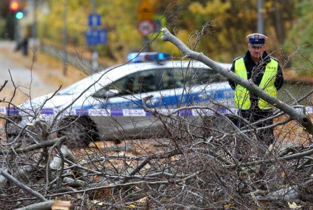 Drzewo zabiło kobietę w Sopocie