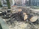 Wycinka na placu Andrzeja w Katowicach. Pod topór poszły trzy topole. Zastąpią je dorodne buki