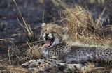 Wsłuchaj się w naturę. Oto najdziwniejsze odgłosy zwierząt. Brzmią niewiarygodnie! Kliknij i posłuchaj (AUDIO)
