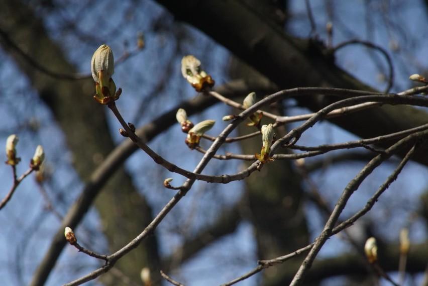 Wszyscy z wyczekiwaniem wypatrują wiosny. Czy w lutym...