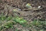 Kraków. Internauci zainicjowali wielkie sprzątanie dawnego obozu Płaszów [ZDJĘCIA]