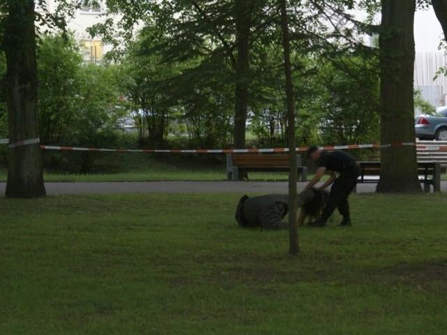 Pies policyjny atakujePies policyjny atakuje