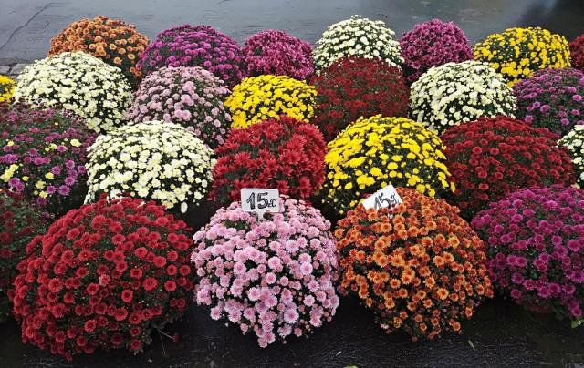 Decyzja o zamknięciu cmentarzy dotknęła boleśnie przedsiębiorców handlujących kwiatami i zniczami. Rząd ma je odkupić za 180 mln złotych